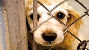 دادستان عمومی و انقلاب بیرجند: حیوانات را اذیت کنید زندان میروید
