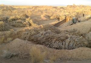 کشف حدود ۳ تن چوب قاچاق در خراسان جنوبی