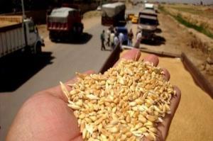 کشفوضبط ۵۰ تن گندم قاچاق در زنجان