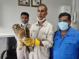 نجات پرنده شکاری کمیاب در بندرعباس