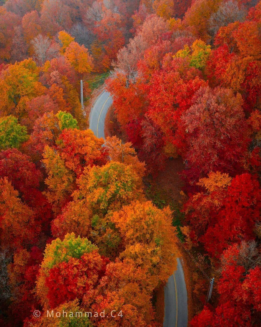 تصویری شگفتانگیز از پاییز در جنگلهای دراز نو