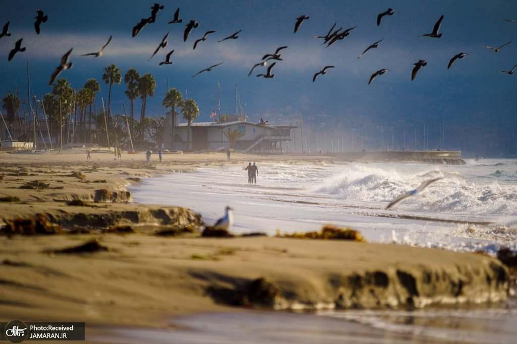 پرواز مرغان دریایی در سواحل کالیفرنیا
