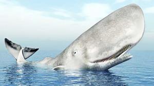 ویدیویی جالب از نزدیک شدن نهنگی به ساحل نیوزلند