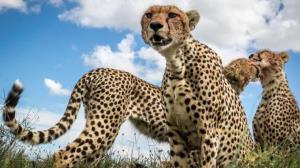 گوناگون/ سریعترین حیوانات جهان را بشناسید