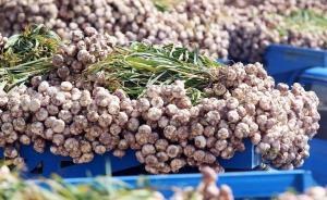 ۶.۳ درصد صادرات کشاورزی کشور، سهم استان همدان