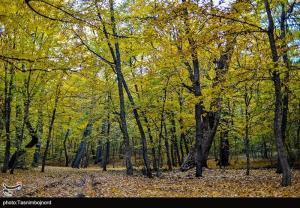 طبیعت زیبای پاییزی بجنورد به روایت تصاویر