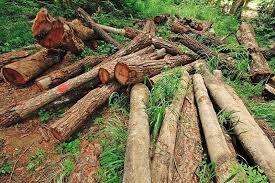 ممنوعیت حمل، جابهجایی و قطع درختان تا اواخر آبان ماه در خداآفرین