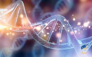 آیا چاقی با ژنتیک در ارتباط است؟