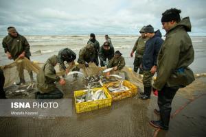 افزایش صید ماهیان استخوانی در مازندران