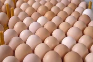 قیمت گوشت مرغ در زنجان افزایش یافت