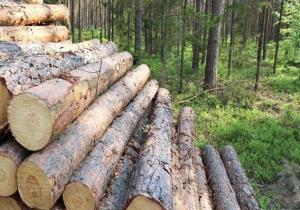 متخلفان قطع اشجار در منطقه حفاظتشده خداآفرین دستگیر شدند