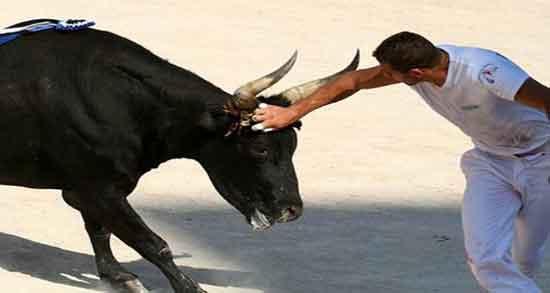 فرار به موقع از حمله گاوها
