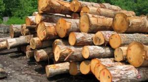 کشف ۸۰ تن چوب و زغال در استان اصفهان