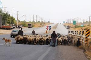رئیس اداره امور عشایر سمیرم: عشایر باقی مانده در ییلاق به قشلاق کوچ کنند