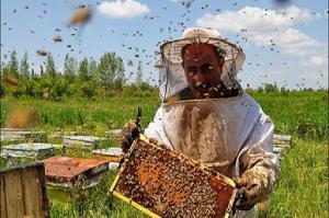 ببینید جمع کردن شهد عسل چقدر سخته!