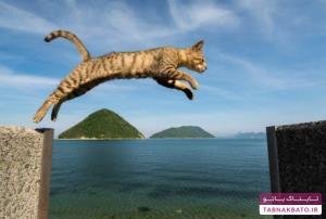 ضرب المثل/ گربه هفت جان دارد
