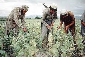 تغییر تجارت تریاک افغانستان، افزایش خطر برای ایران