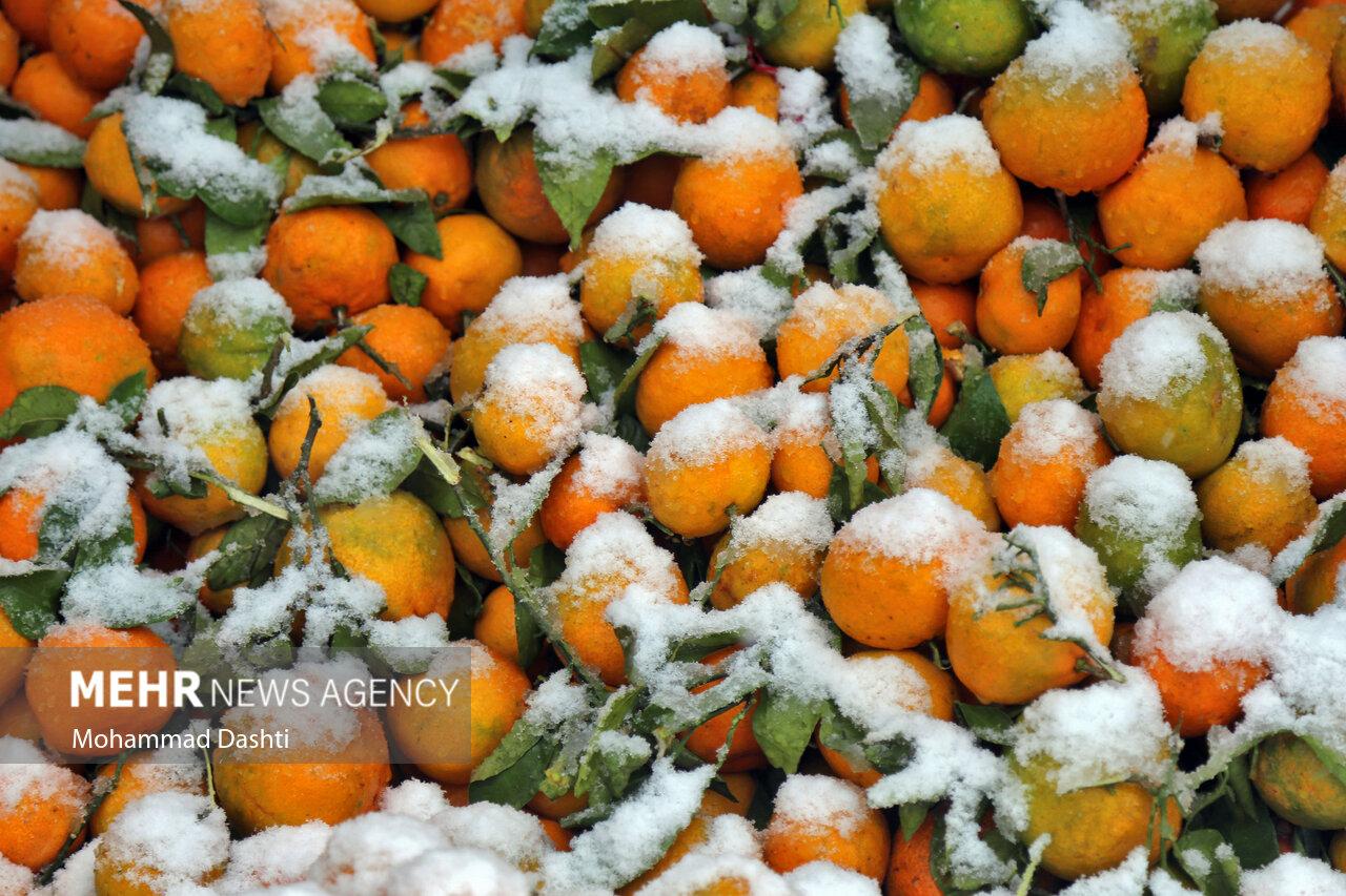 عکس/ بارش اولین برف پاییزی در اردبیل