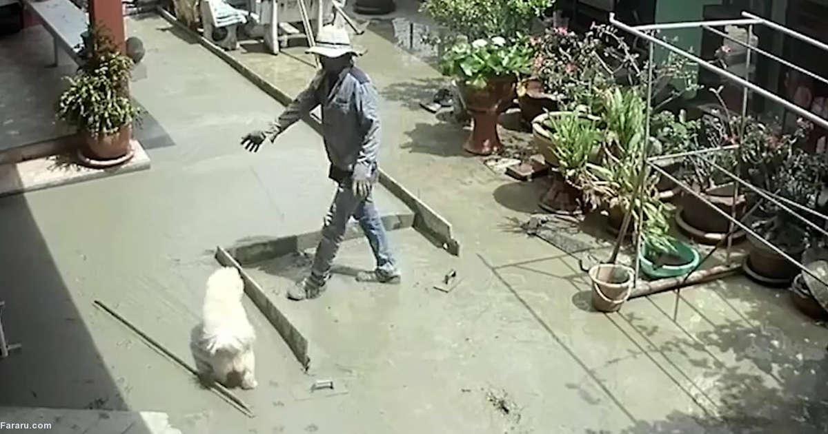 سگ بازیگوش زحمات کارگران ساختمانی را به باد داد!