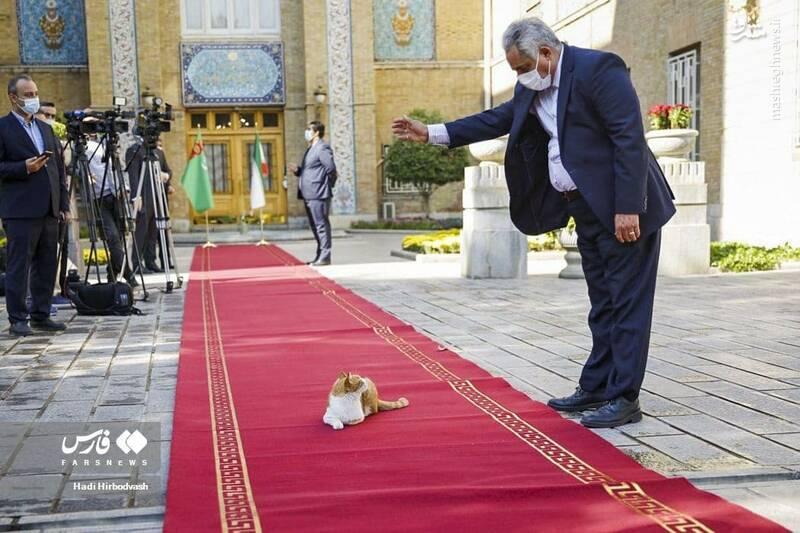 عکس/ مهمان ناخوانده روی فرش قرمز وزارت خارجه سوژه شد