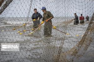 ۳۷۰۰ تن ماهی از دریاچه پشت سد ارس برداشت میشود