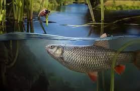 حرکت زیبای ماهی ها در آب زلال