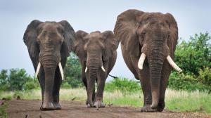 نجات فیل بازیگوش با بیل مکانیکی