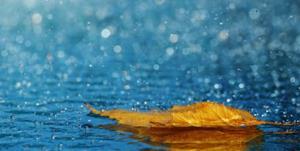 کاهش ۲۵ درصدی بارش در نخستین ماه سال زراعی مازندران