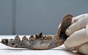 4 گوشه دنیا/ کشف آرواره ۱۲ هزار ساله یک سگ در آمریکا