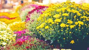 کدام گلها مناسب باغچههای پاییزی هستند؟