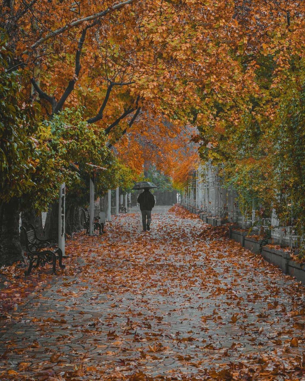 پاییز بلوار ارم شیراز