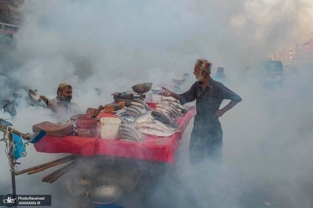 عکس/ راه حل ماهی فروشان پاکستانی برای پشه ها