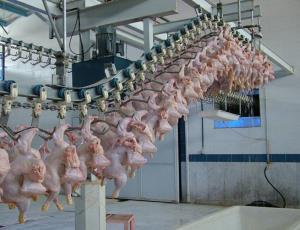 ورود بیش از ۲۳ میلیون کیلو گوشت گرم مرغ به بازار زنجان