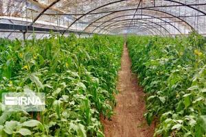 ۱۲ شهرک گلخانهای لرستان به سرمایهگذاران واگذار میشود