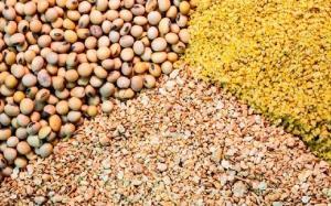 کشف خوراک دام احتکاری در اسلام آبادغرب