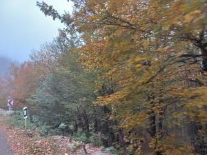 رفت و برگشت هوای پاییزی در گیلان