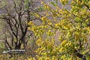 پاییز هزار رنگ در فریدونشهر
