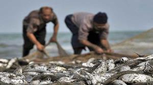 کاهش صادرات آبزیان از مازندران