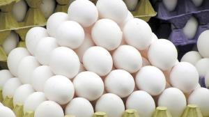 روزانه ۴۸ تن تخممرغ در کردستان مصرف میشود